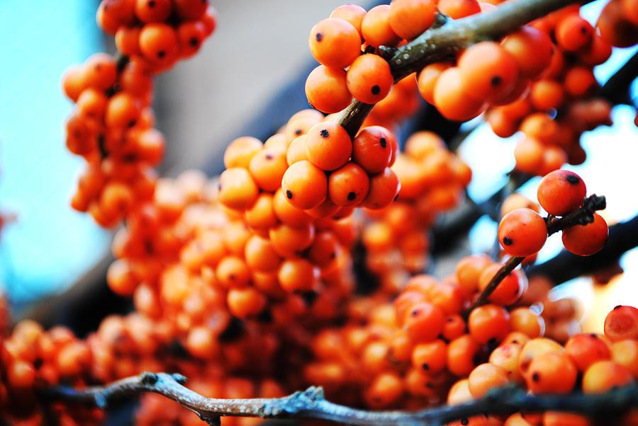 Orange Photograph - Oranges by Charlie Gaddy