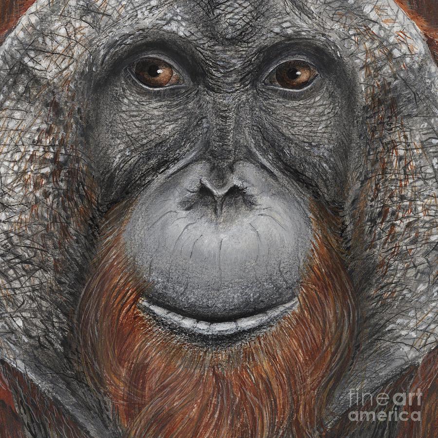 Orangutan Face - Orang-utan  - Orangutang - Orang-utang - Fine Art Print - Stock Illustration Painting