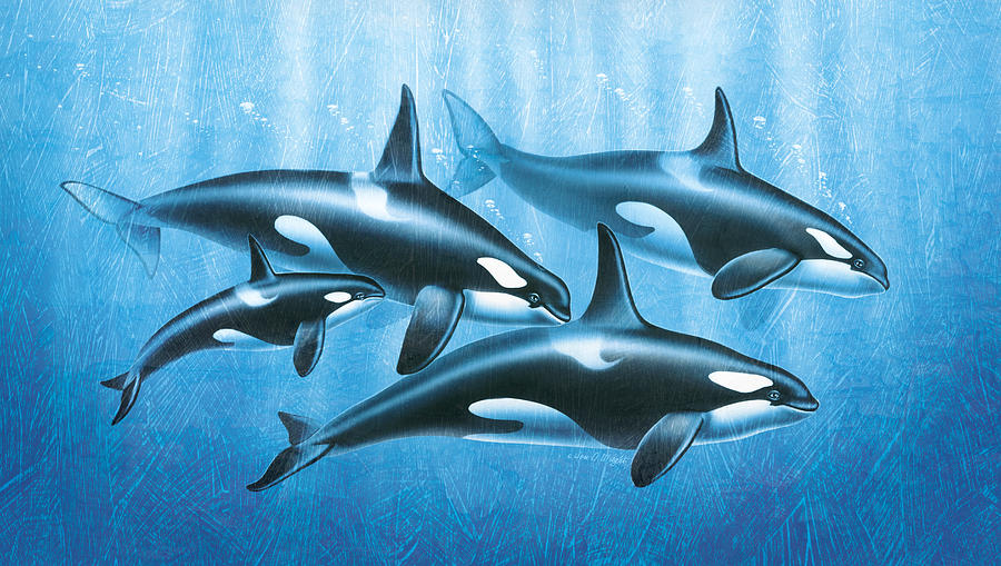 Jon Q Wright Painting - Orca Group by JQ Licensing