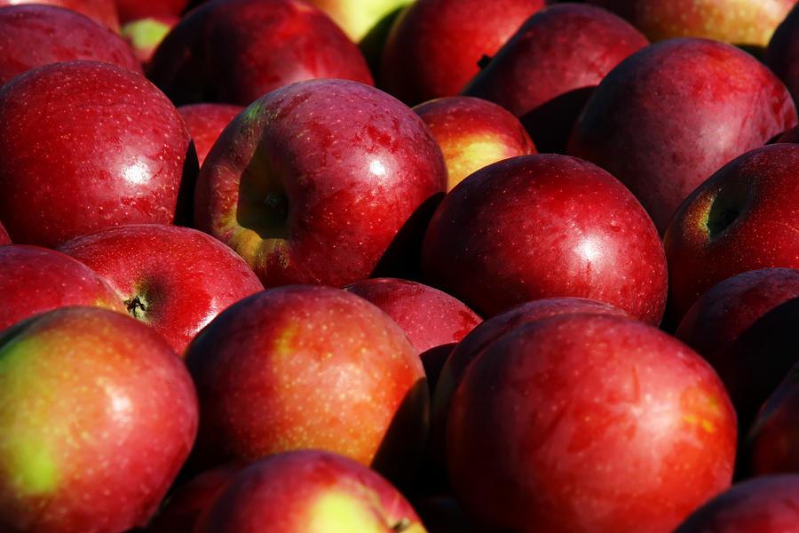 Orchard Fresh Photograph - Orchard Fresh by Denyse Duhaime