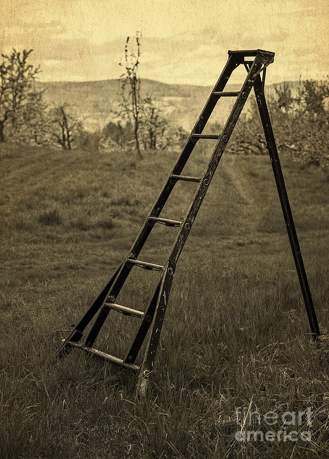 Ladder Photograph - Orchard Ladder by Edward Fielding