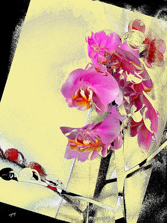 Flower Photograph - Orchid And Cream by Martin Jay