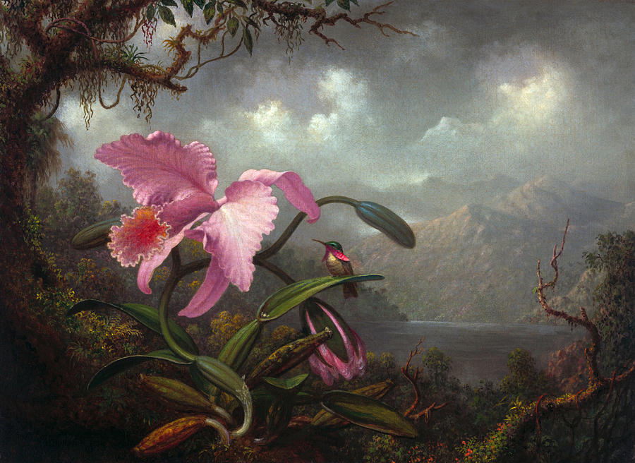 Orchid And Hummingbir Painting By Martin Johnson Heade