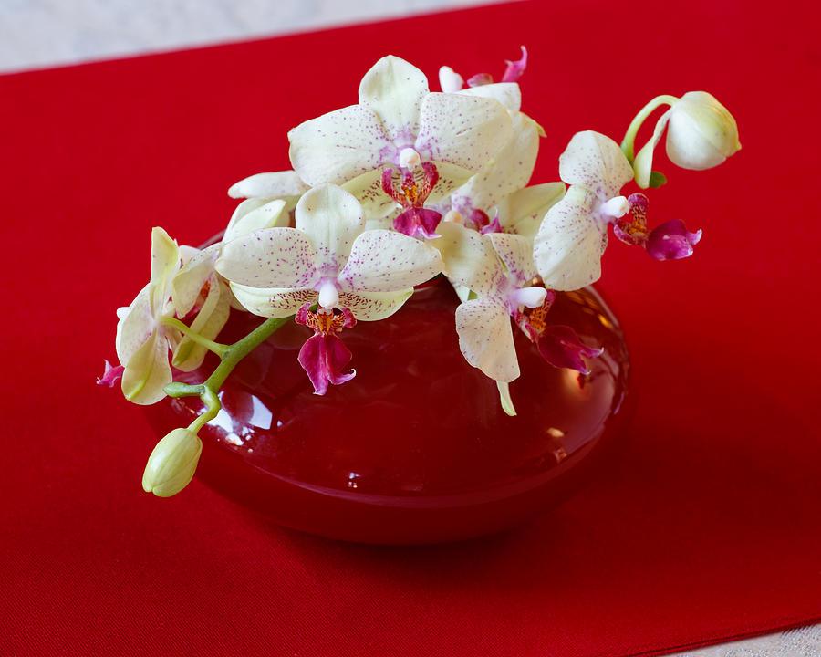 Colour Photograph - Orchid center piece by Paul Indigo