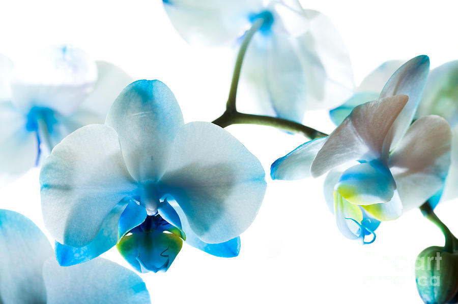 Orchid Photograph - Orchid Closeup by Boon Mee