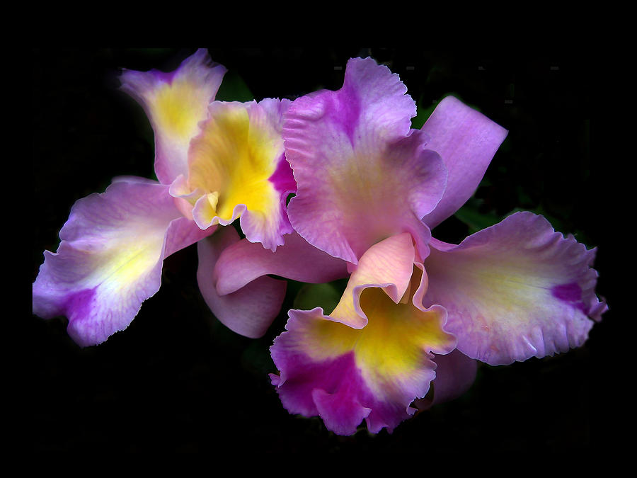 Flowers Photograph - Orchid Embrace by Jessica Jenney