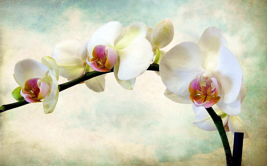 Flowers Photograph - Orchid Heaven by Jessica Jenney