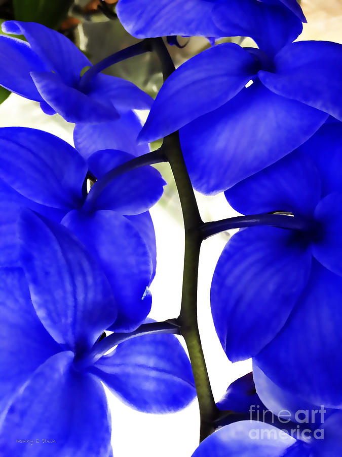 Orchid In Blue Photograph