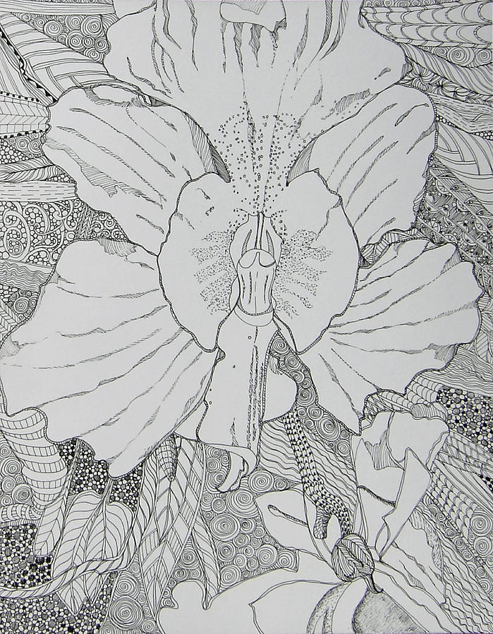 Orchid Drawing - Orchid In Disguise by Terry Holliday