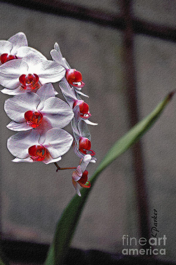 Flower Photograph - Orchid In Window by Linda  Parker
