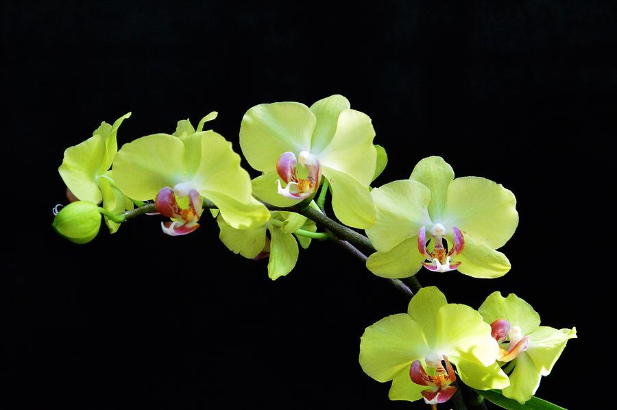 Orchid Photograph - Orchid Love by David Earl Johnson