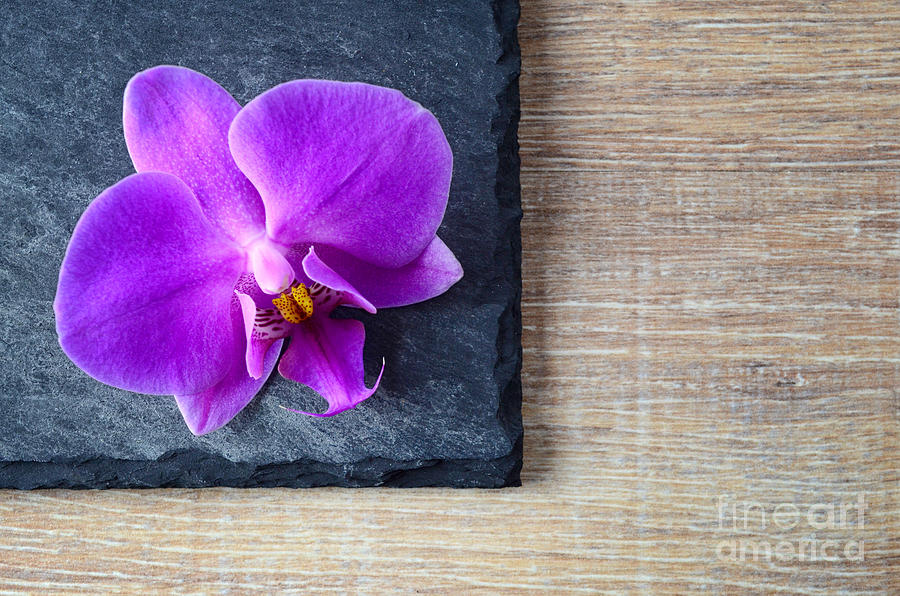 Orchid On Black Slate Photograph