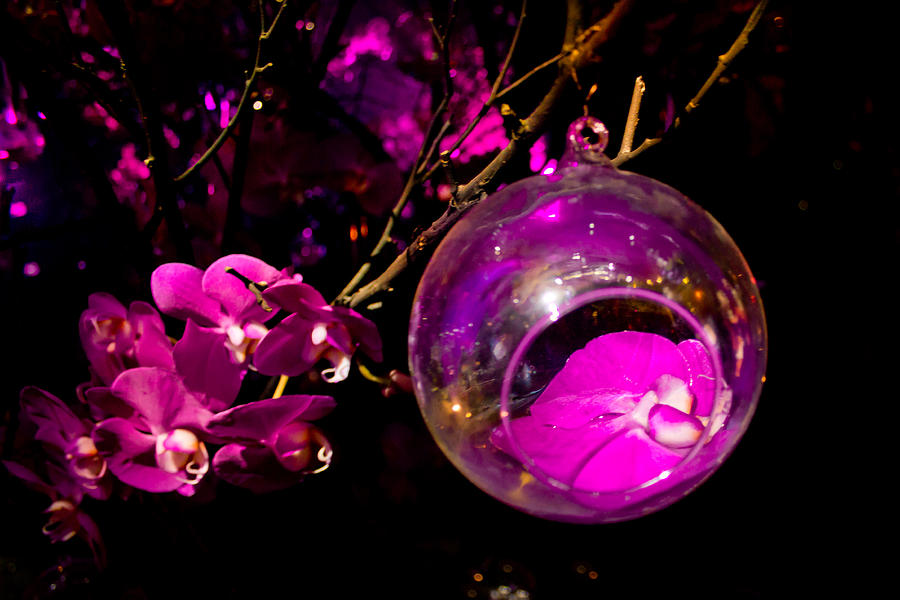 Ornament Photograph - Orchid Ornament by Nadya Ost