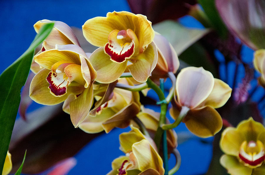 Orchid Photograph - Orchid Pt 1 by Heidi  Kleva
