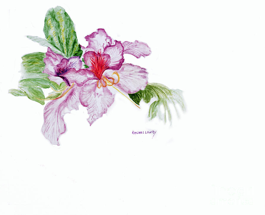 Orchid by Rachel Lowry