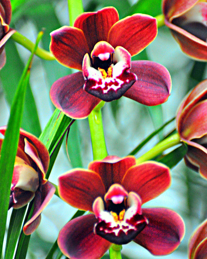 Orchid Photograph - Orchid Rusty by Marty Koch