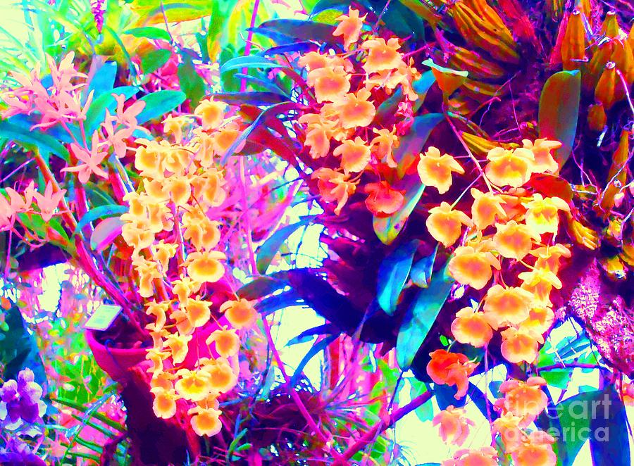Vibrant Photograph - Orchid Splash by Ann Johndro-Collins