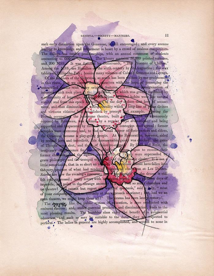 Orchids Mixed Media - Orchid Study I by Rudy Nagel