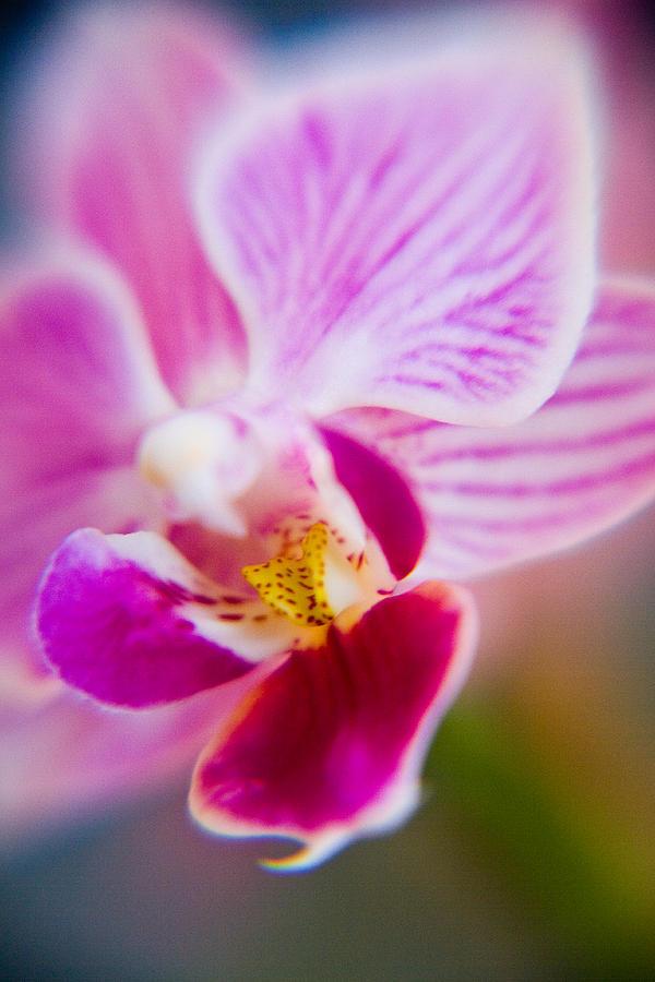 Flower Photograph - Orchide Detail 2 by Kim Lagerhem