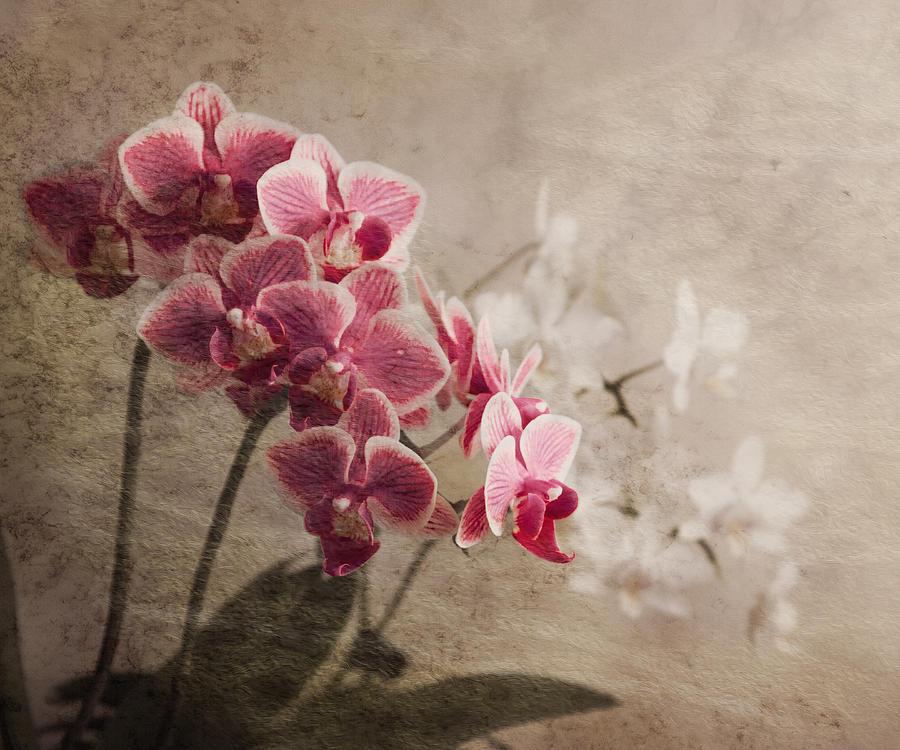 Orchidea Photograph