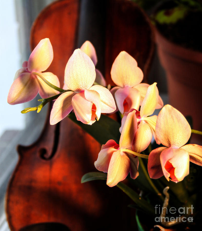 Orchid Photograph - Orchids And Violin by Steven Digman