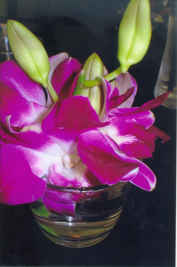 Orchids In A Glass Photograph by Robert Bray