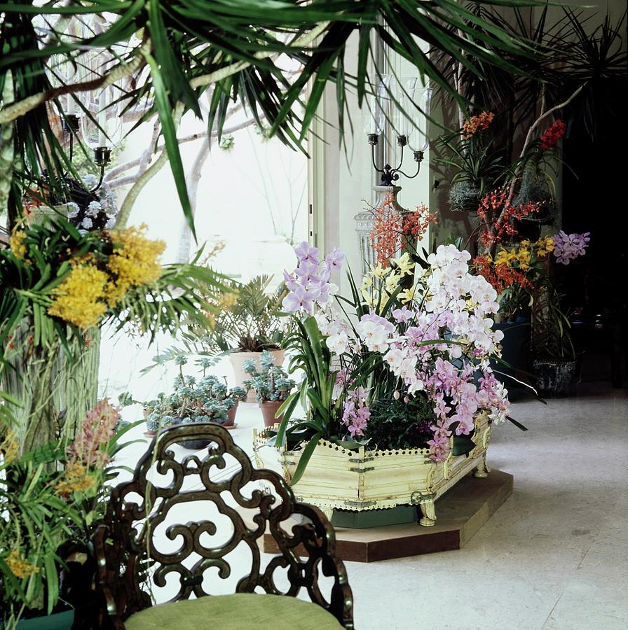 Orchids In Enid Annenberg Haupts Home Photograph by Horst P. Horst