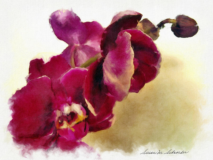 Orchids No. 5 by Susan Schroeder