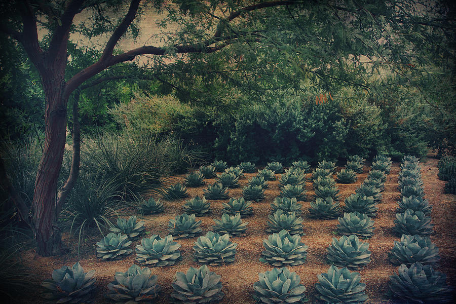 Sunnylands Center And Gardens Photograph - Order by Laurie Search