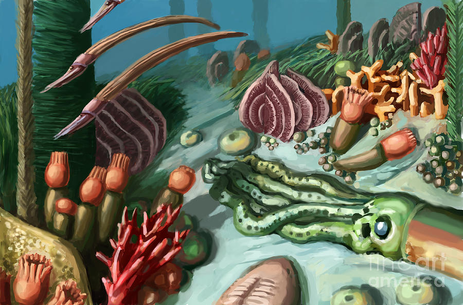 Illustration Photograph - Ordovician Period Scene by Spencer Sutton
