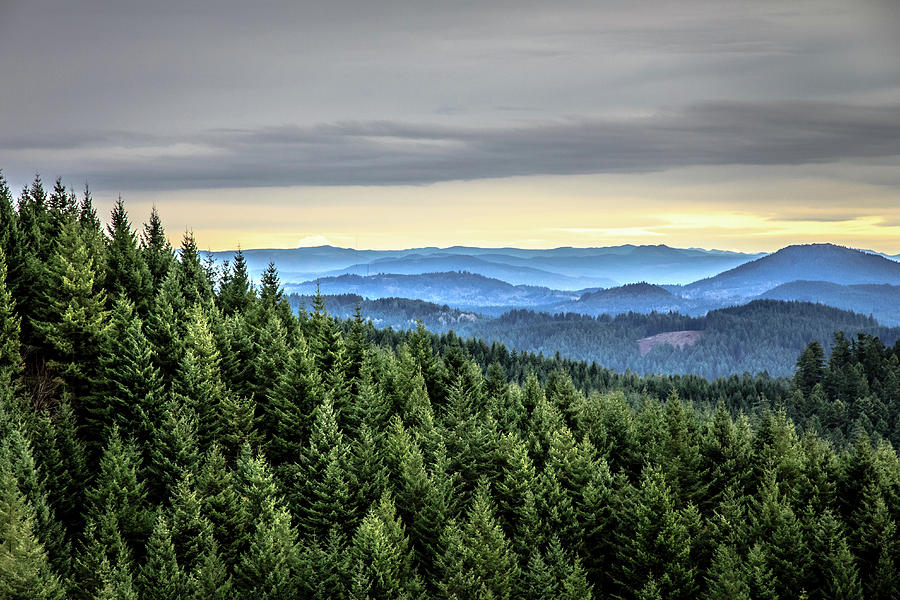 Oregon Forest Photograph by Richard Hicks