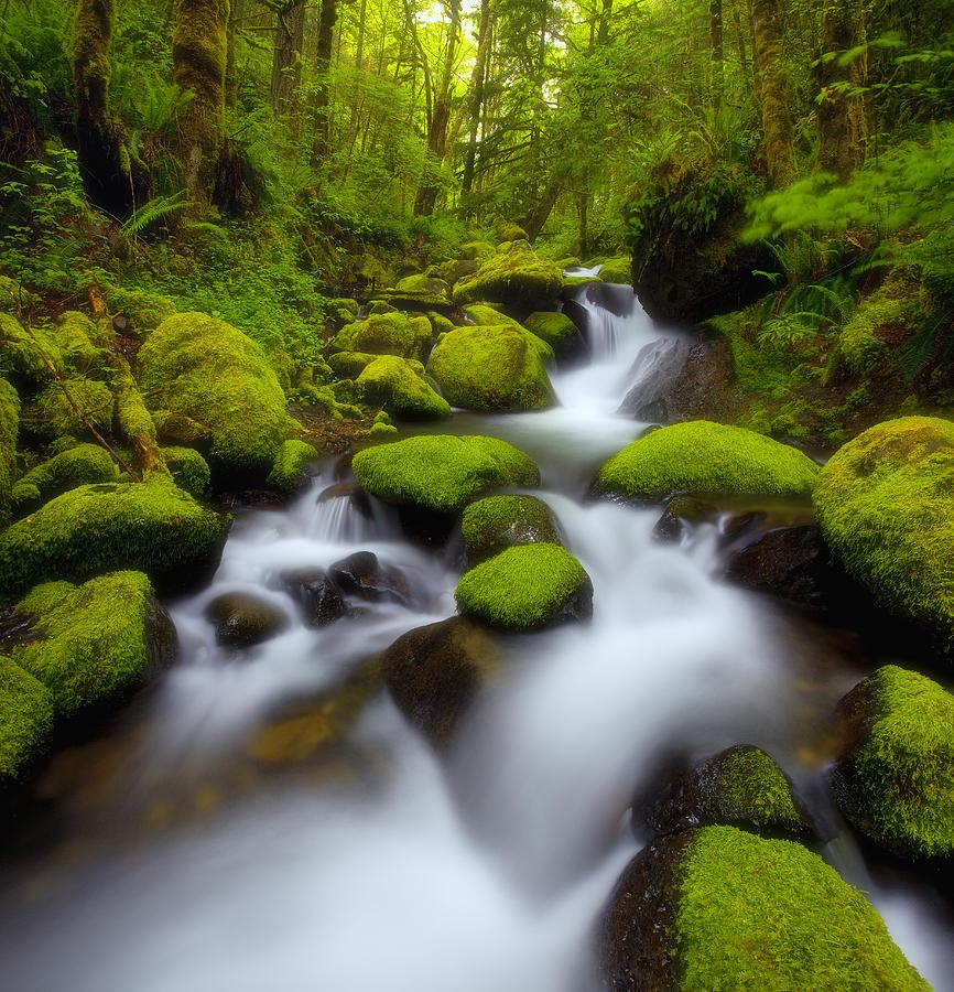 Oregon Mossy Dreams Photograph