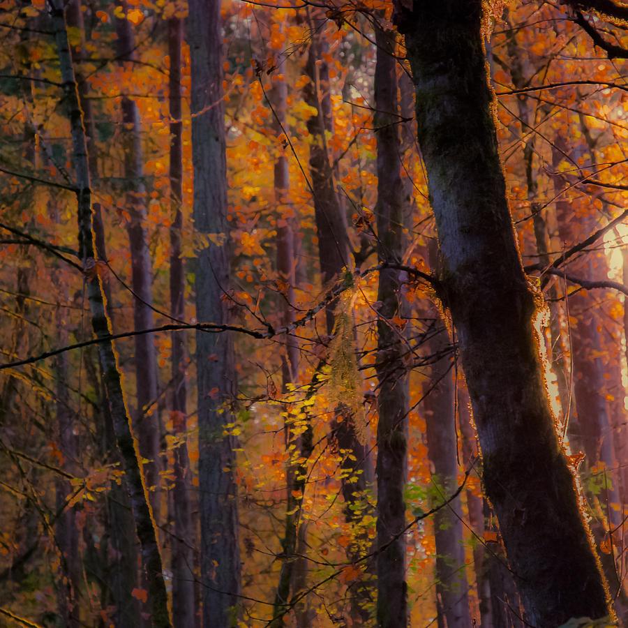 Oregon Photograph - Oregon Twilight by John Magnet Bell