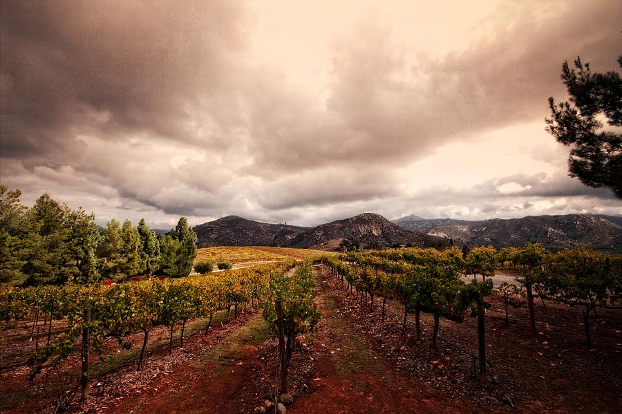 Winery Photograph - Orfila by Ryan Weddle