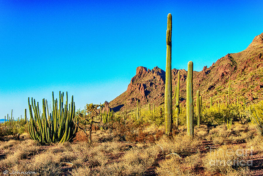 Arizona Photograph - Organ Pipe Cactus National Monument Late Afternoon by Bob and Nadine Johnston