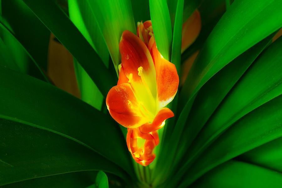 Flower Photograph - Organic Glowing by Daniel Daniel