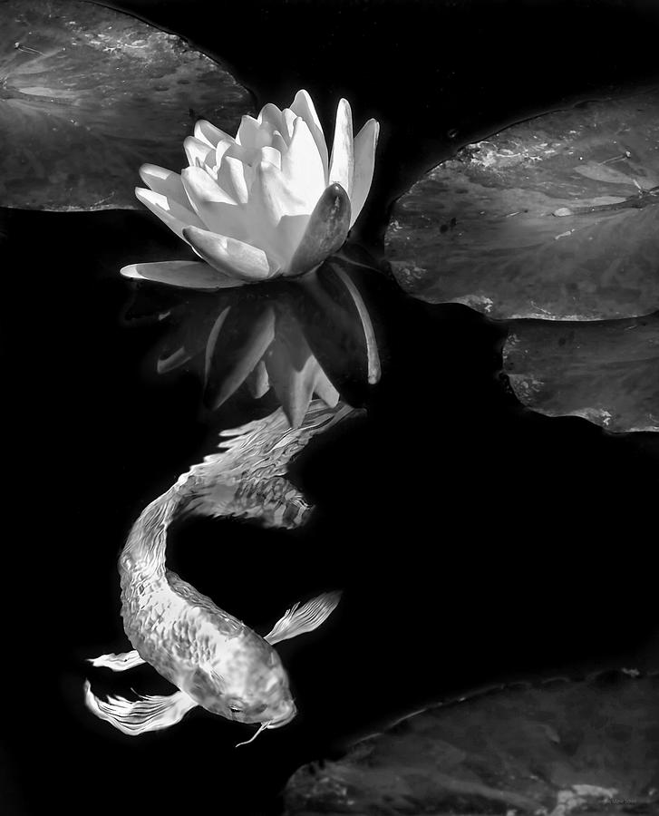 Oriental Koi Fish And Water Lily Flower Black White Photograph