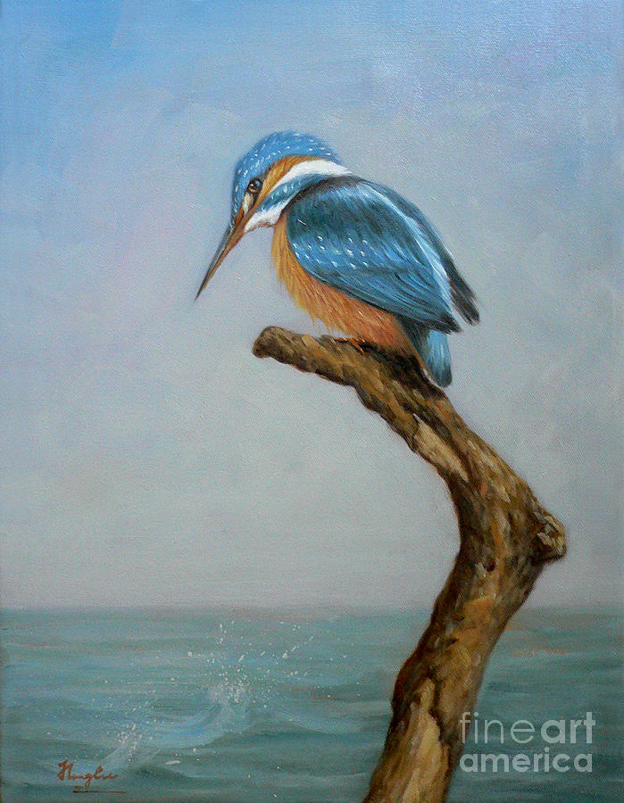 Original Animal Oil Painting Bird Art Kingfisher On Canvas 16 2 6 15