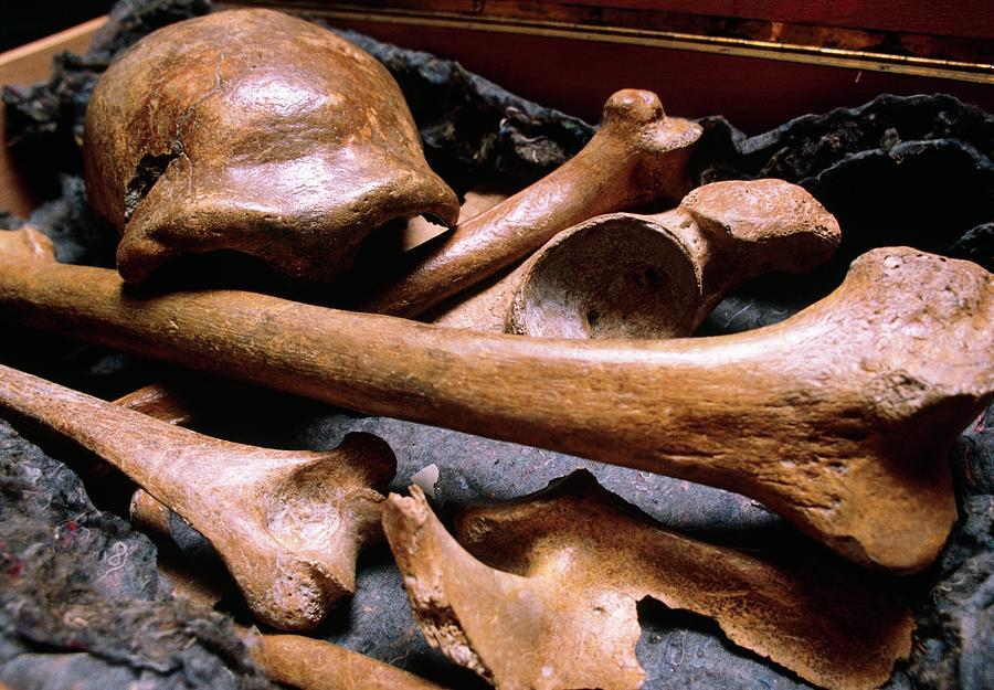 Neanderthal Man Photograph - Original Type Specimen Of Neanderthal Man by John Reader/science Photo Library