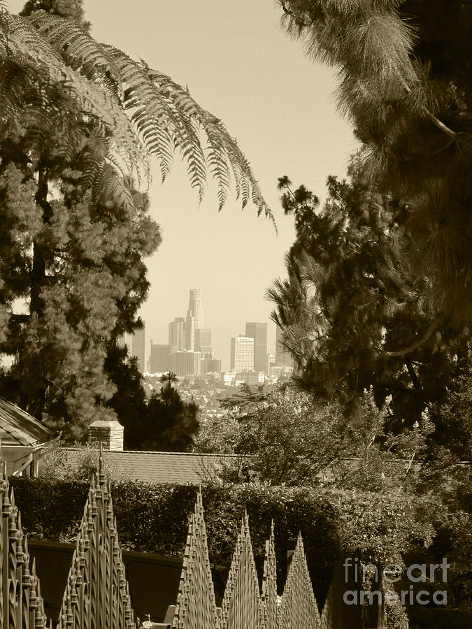 Tree Photograph - Original Vintage Urban Landscape Deco Reproduction Downtown Los Angeles Trees Retro Unique Fine Art by Marie Christine Belkadi