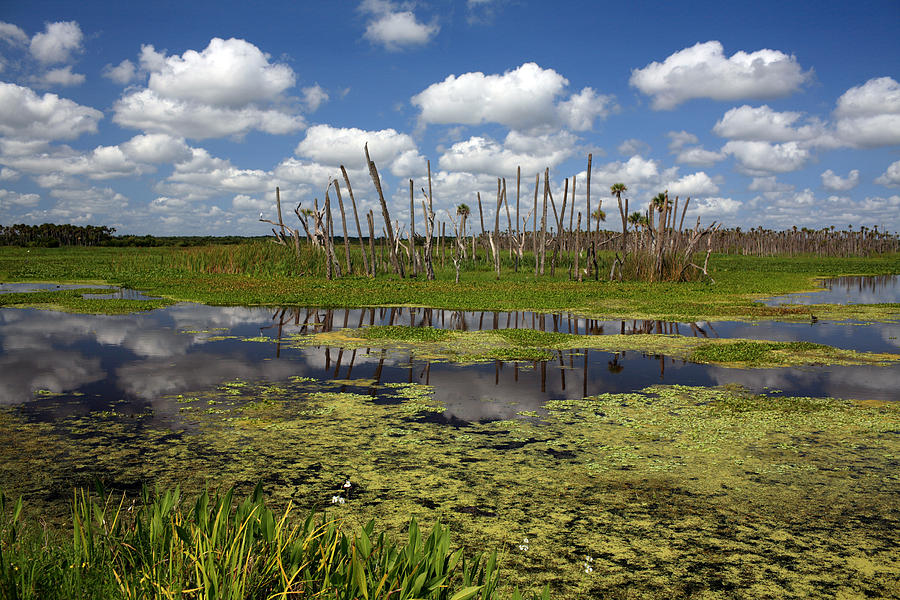 Orlando Photograph - Orlando Wetlands Cloudscape 2 by Mike Reid