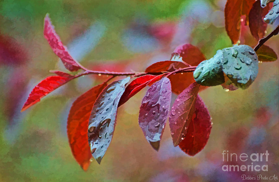 Plum Tree Leaves Pictures