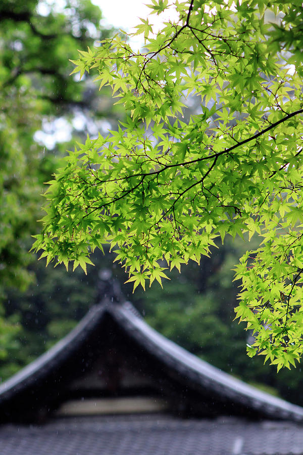 Ancient Photograph - Ornately Designed Roof And Japanese by Paul Dymond