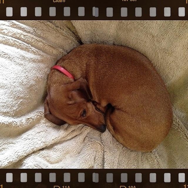 Dachshund Photograph - Oscar The Hot Dog by Susan Candelario