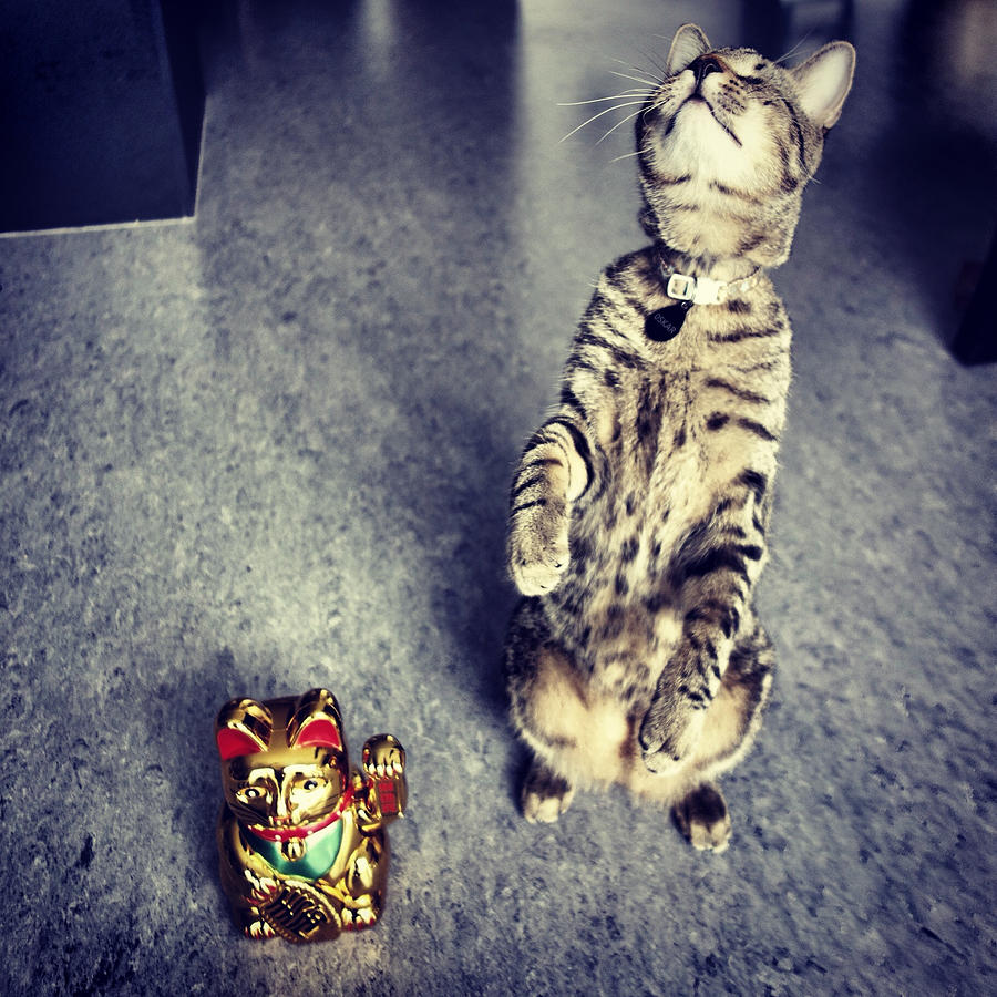 Cat Photograph - Oskar Feeling It by Mick Szydlowski