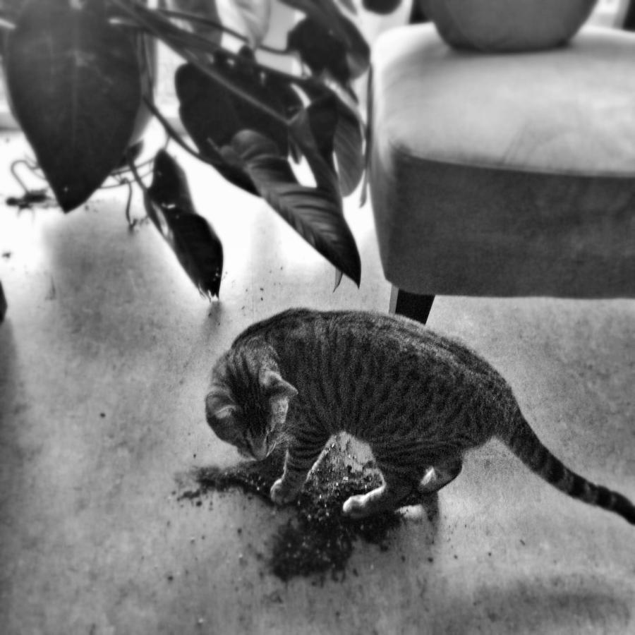 Cat Photograph - Oskar In Trouble by Mick Szydlowski