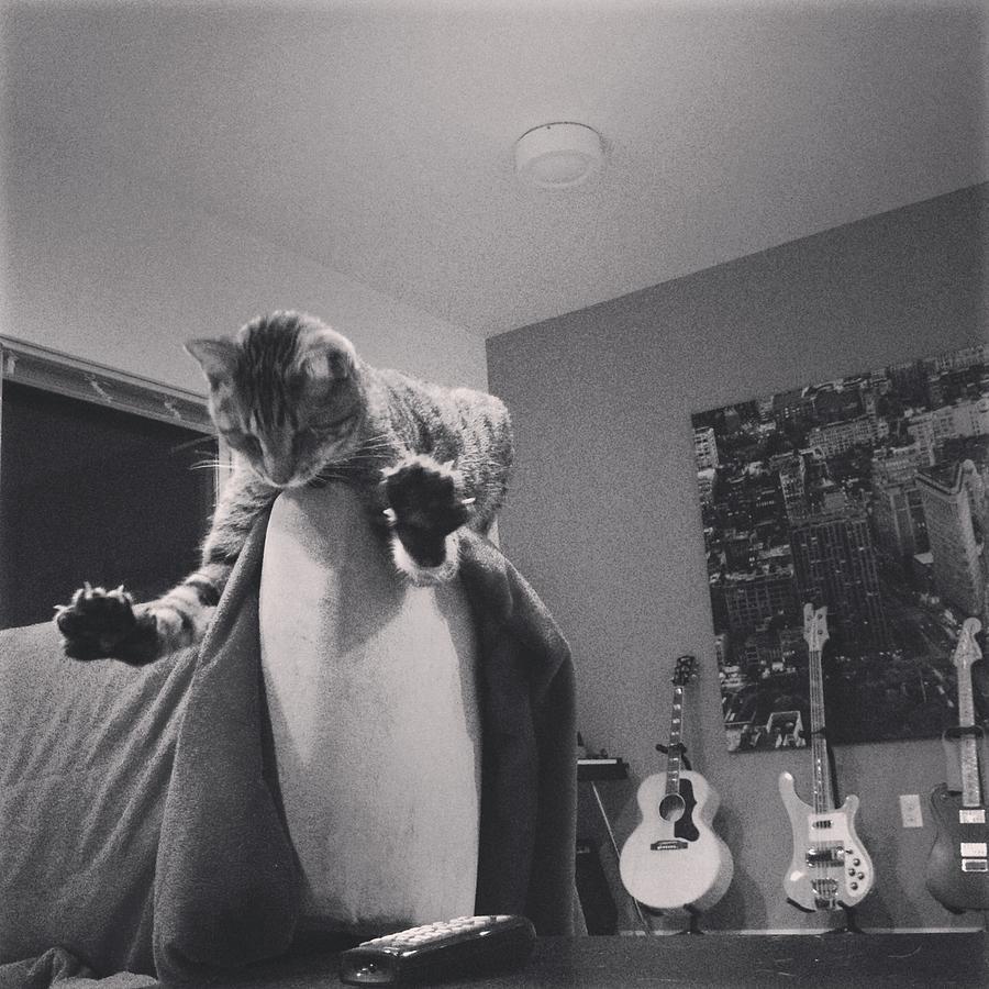 Cat Photograph - Oskar Super Cat by Mick Szydlowski