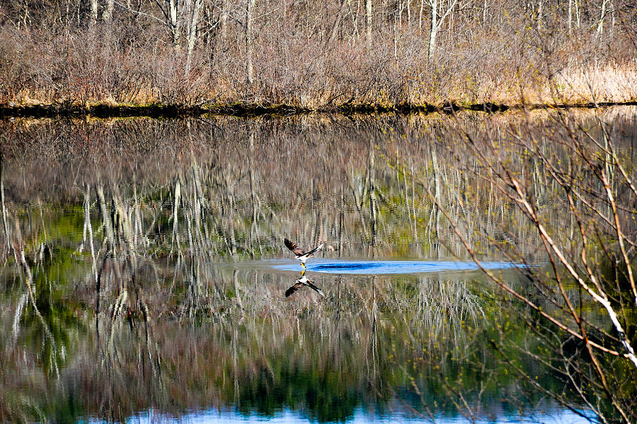 Osprey And Prey Reflection Photograph