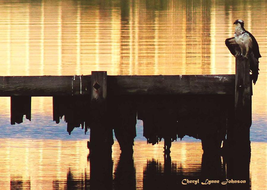 Osprey Photograph - Osprey by Cheryl Lynne  Leech-Johnson