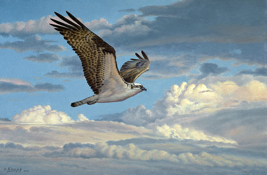 Wildlife Painting - Osprey In The Clouds by Paul Krapf